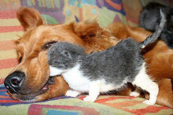 animal-friends-40-photos- (2)