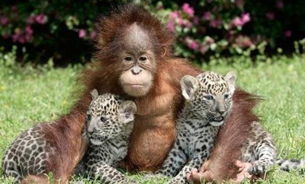 animal-friends-40-photos- (4)