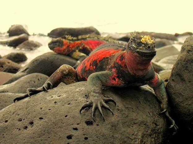 galapagos-island-45-photos- (24)
