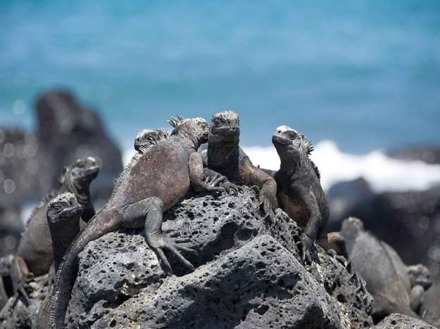 galapagos-island-45-photos- (29)
