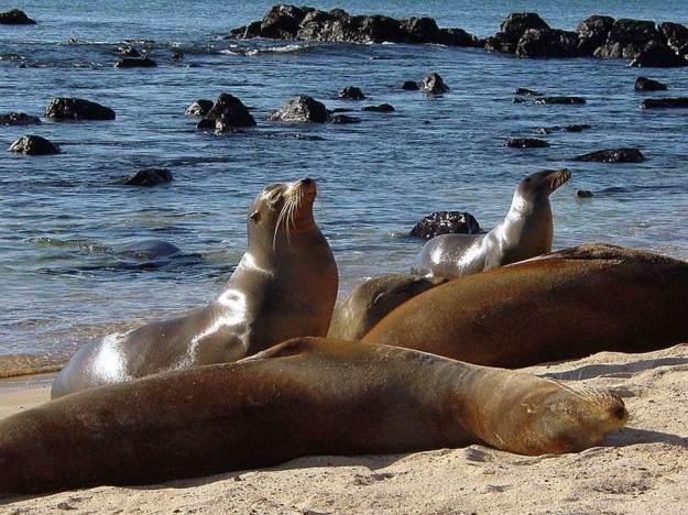 galapagos-island-45-photos- (33)