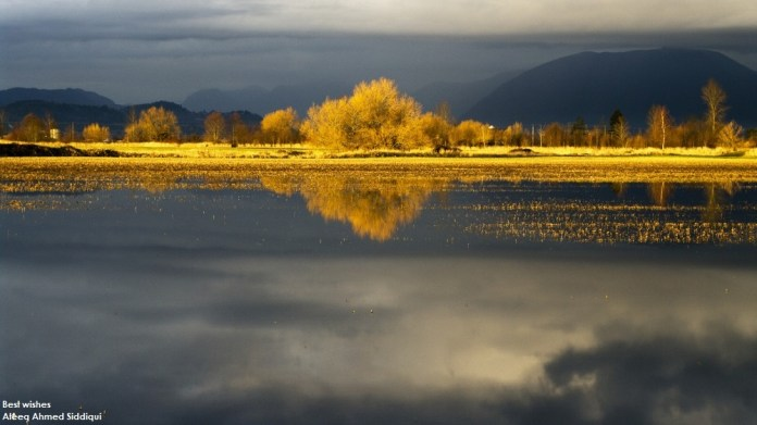 nature-reflections-photos- (19)