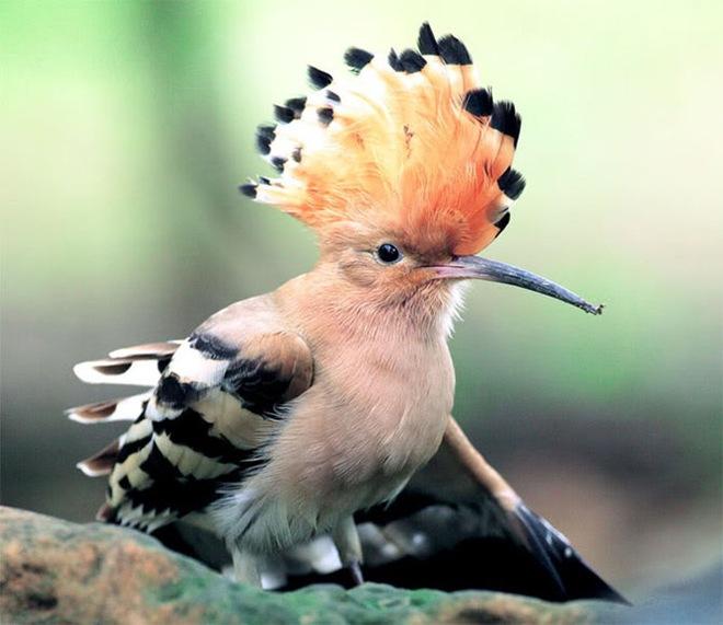 beautiful-birds-photos-by-john-soong- (1)