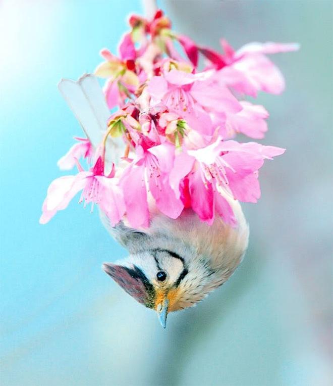 beautiful-birds-photos-by-john-soong- (3)