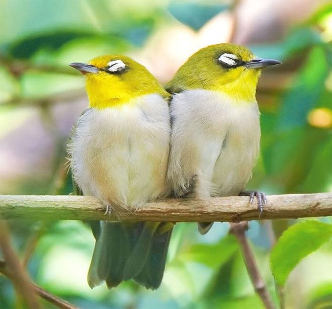 beautiful-birds-photos-by-john-soong- (4)