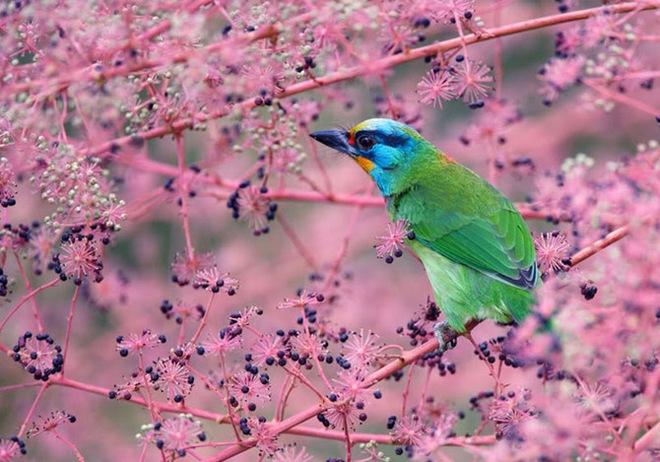 beautiful-birds-photos-by-john-soong- (5)