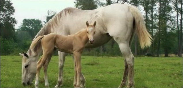 wild-horse-pictures- (3)