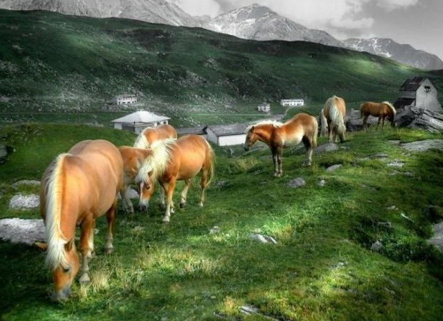 wild-horse-pictures- (4)