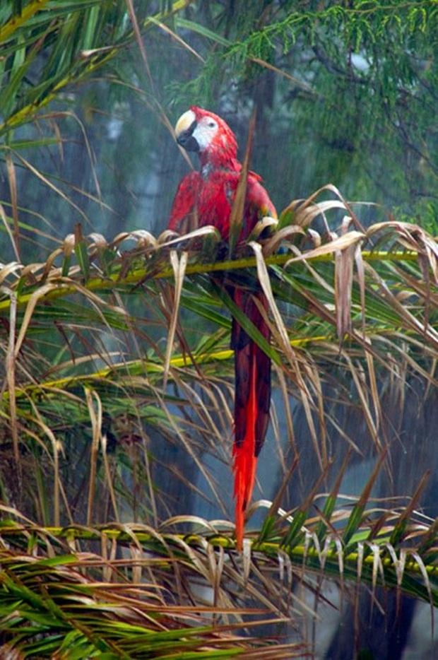 birds-in-rain- (15)