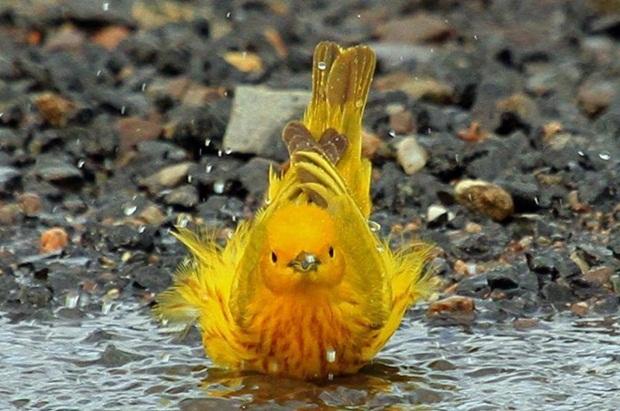 birds-in-rain- (30)