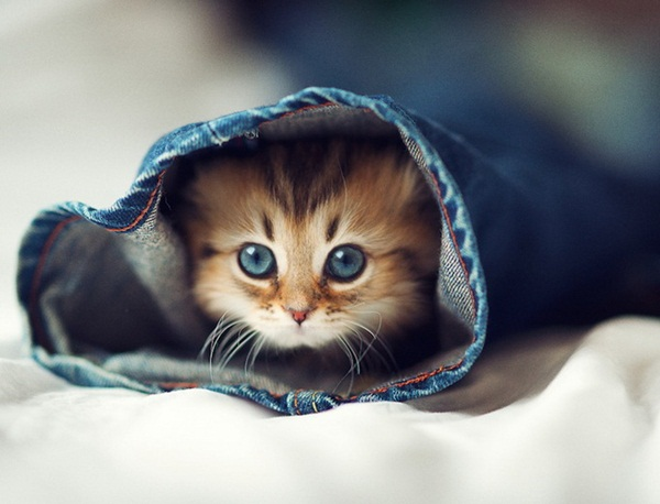 cute-kitten-daisy- (1)