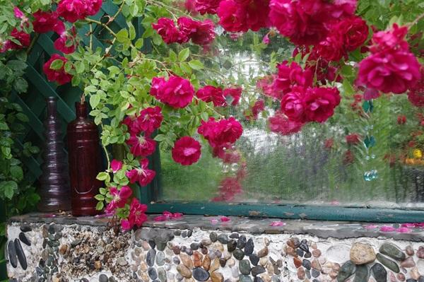 flower-in-rain- (2)