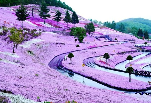 hitachi-seaside-park-japan-24-photos- (2)