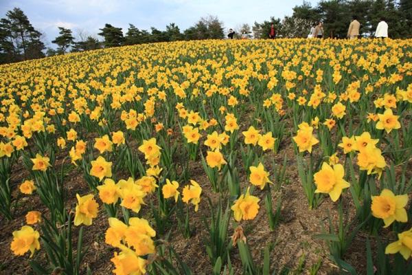 hitachi-seaside-park-japan-24-photos- (24)