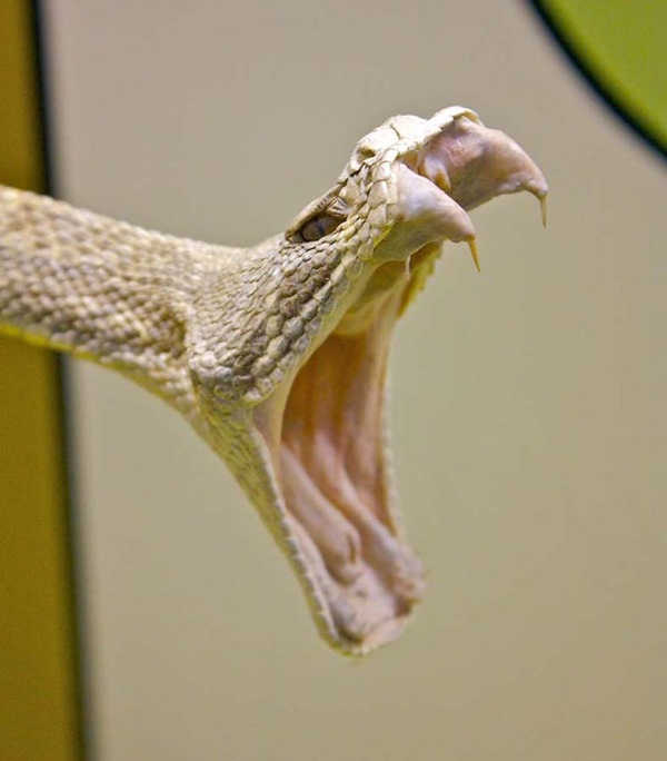 35-snakes-pictures- (7)