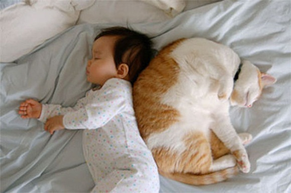 babies-and-cats- (16)
