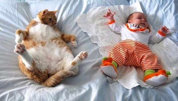 babies-and-cats- (21)