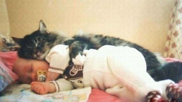 babies-and-cats- (22)