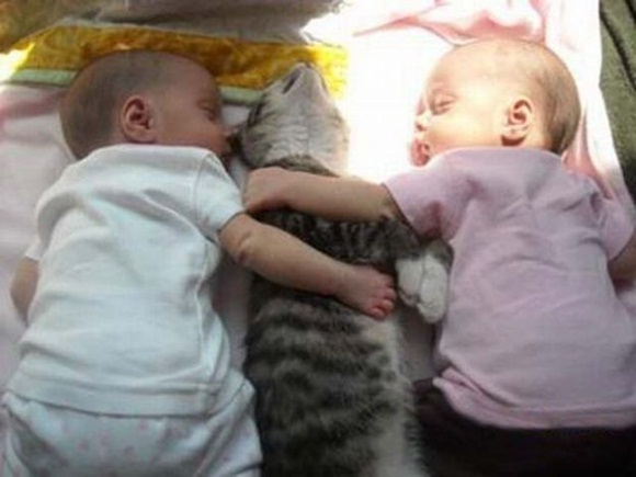 babies-and-cats- (3)