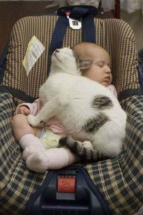 babies-and-cats- (7)
