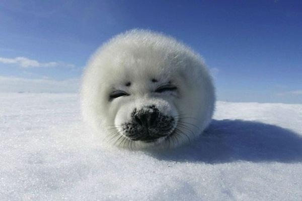 animals-in-snow- (5)