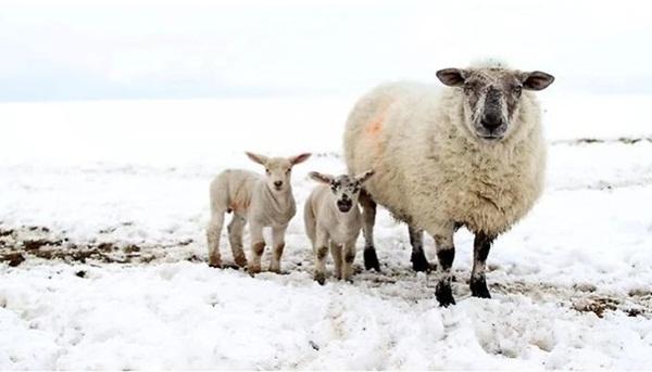 animals-in-snow- (7)