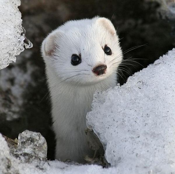 animals-in-snow- (8)