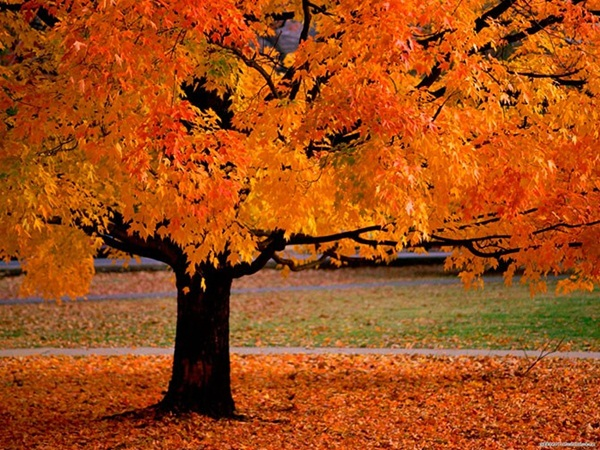 beautiful-autumn-20-pictures- (10)