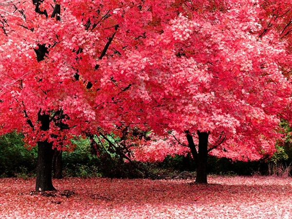 beautiful-autumn-20-pictures- (12)