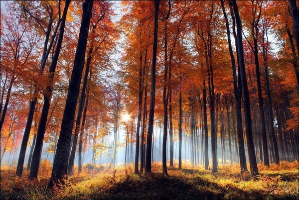 beautiful-autumn-20-pictures- (20)