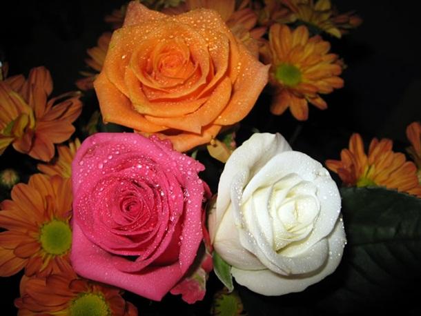 best-roses-26-photos- (10)