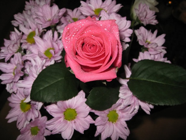 best-roses-26-photos- (15)