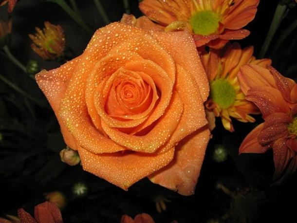 best-roses-26-photos- (5)