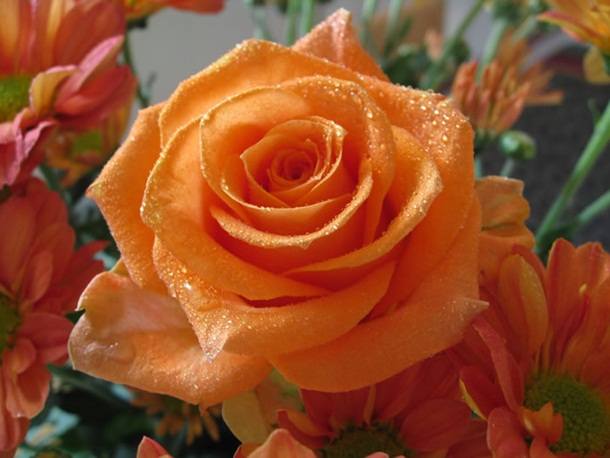 best-roses-26-photos- (6)