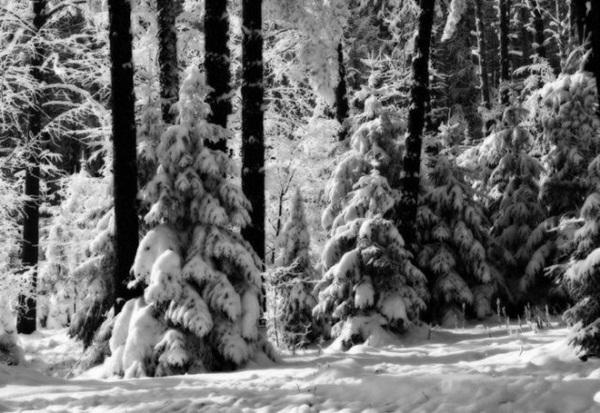 26-winter-photos- (16)