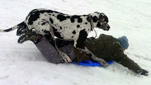 fun-with-snow- (15)