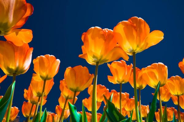 spring-wallpapers- (1)