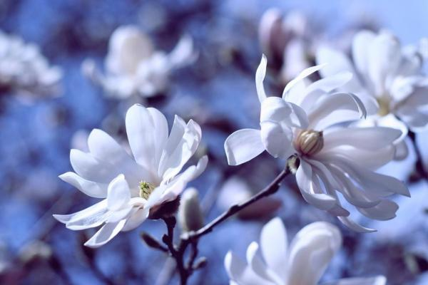 spring-wallpapers- (2)