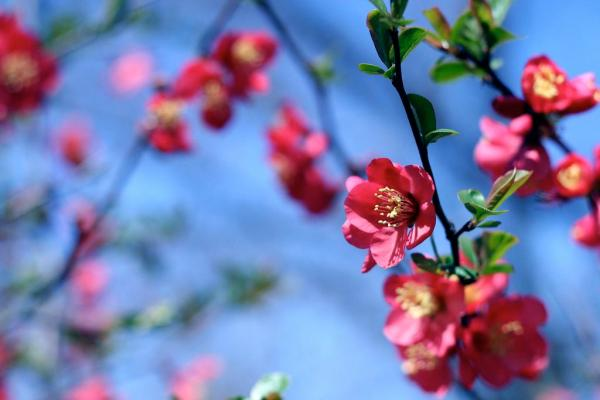 spring-wallpapers- (3)