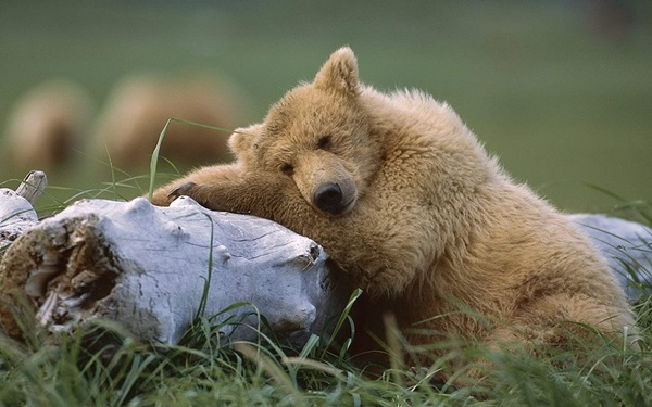 animals-sleeping-28-photos- (4)