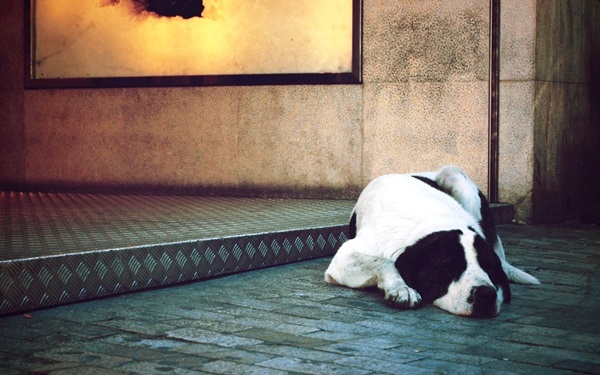 animals-sleeping-28-photos- (5)