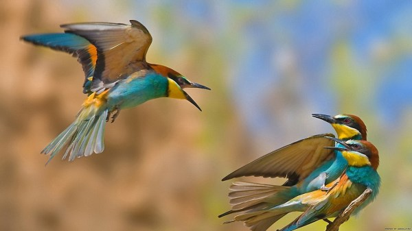 birds-wallpaper-20-photos- (10)