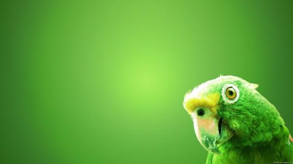 birds-wallpaper-20-photos- (8)