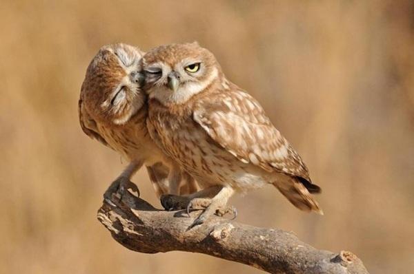 funny-birds-40-photos- (11)