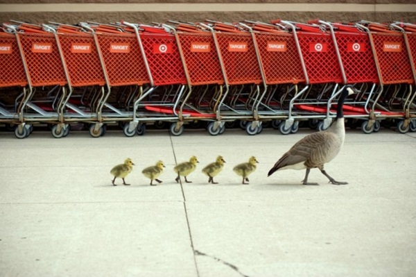 funny-birds-40-photos- (13)