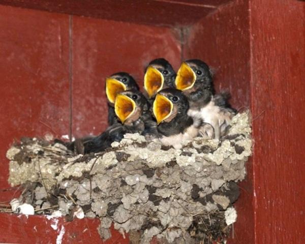 funny-birds-40-photos- (17)