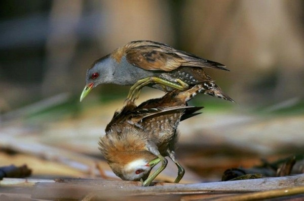 funny-birds-40-photos- (19)