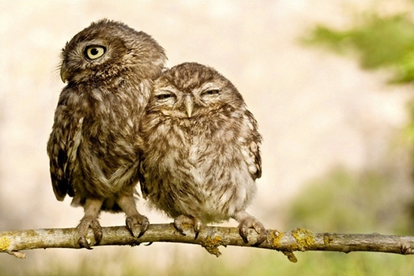 funny-birds-40-photos- (20)