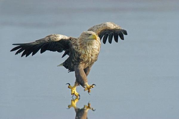 funny-birds-40-photos- (26)