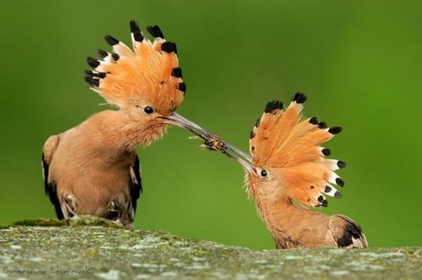 funny-birds-40-photos- (3)